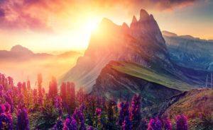 Sunrise over the mountains with purple flowers blooming in foreground