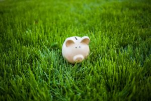 Piggy bank in green grass