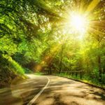 Curving road through forest with sun shining through trees