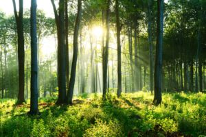 Morning sunshine in the forest