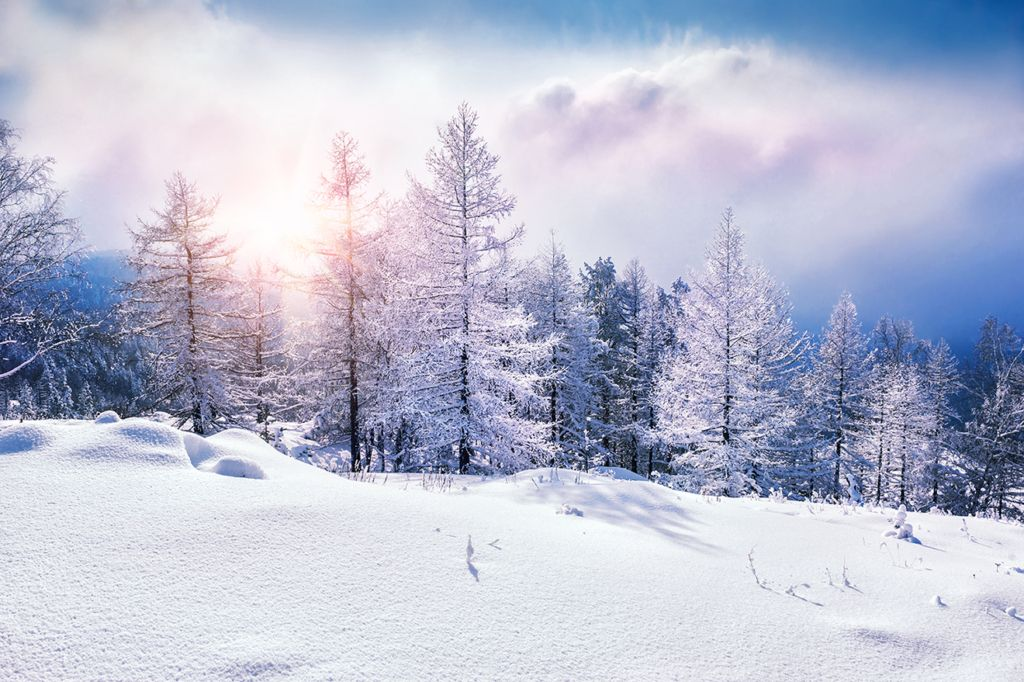 image of snowy winter trees
