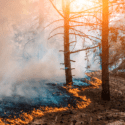 image of the edge of a forest fire