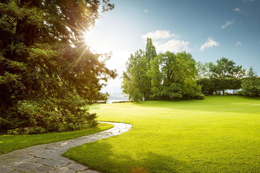 A nature park with a concrete path, trees, grass, while the sun is shining in the sky.