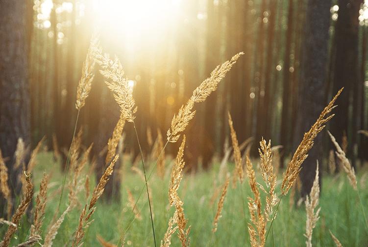 field sun trees grass