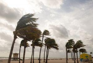 wind beach palm trees hurricane storm