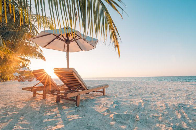 beach chair palm trees sunset