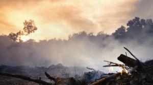 wild fire forest smoke